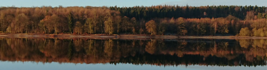 The reflection of the trees on a still lake, with blue skies